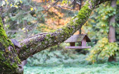 bird-house-birdhouse-blur-754738